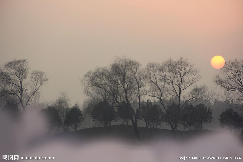 新手枯树夜空风景画